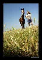 horse understanding