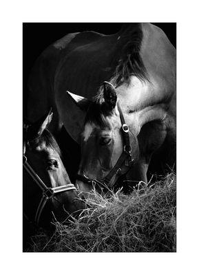 *horses*