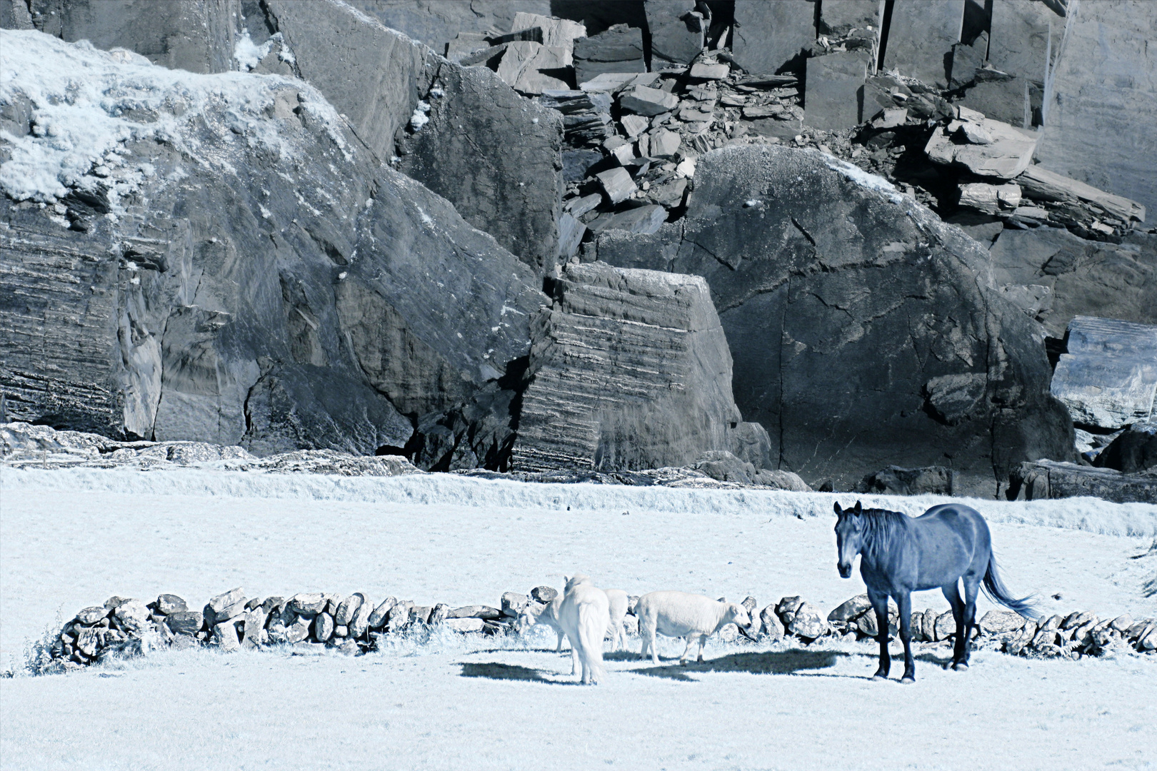 Horses and Cliffs