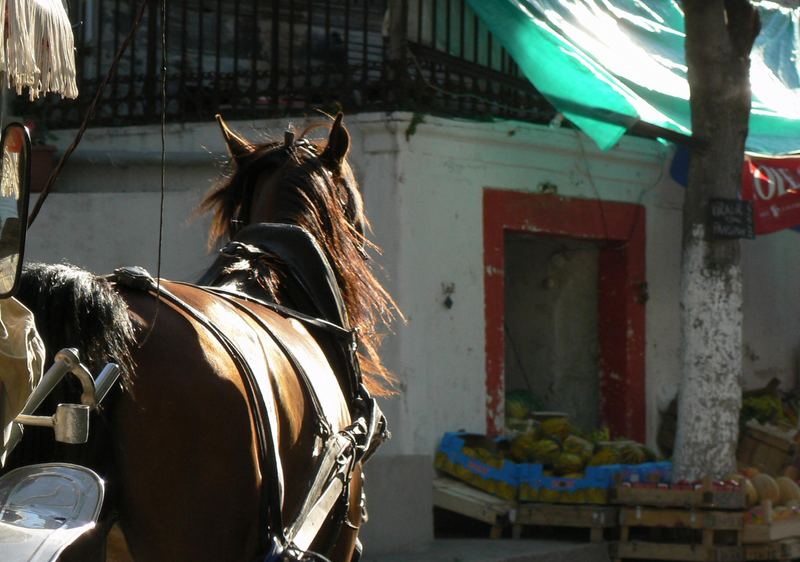 Horses & Colours of Princes' Islands