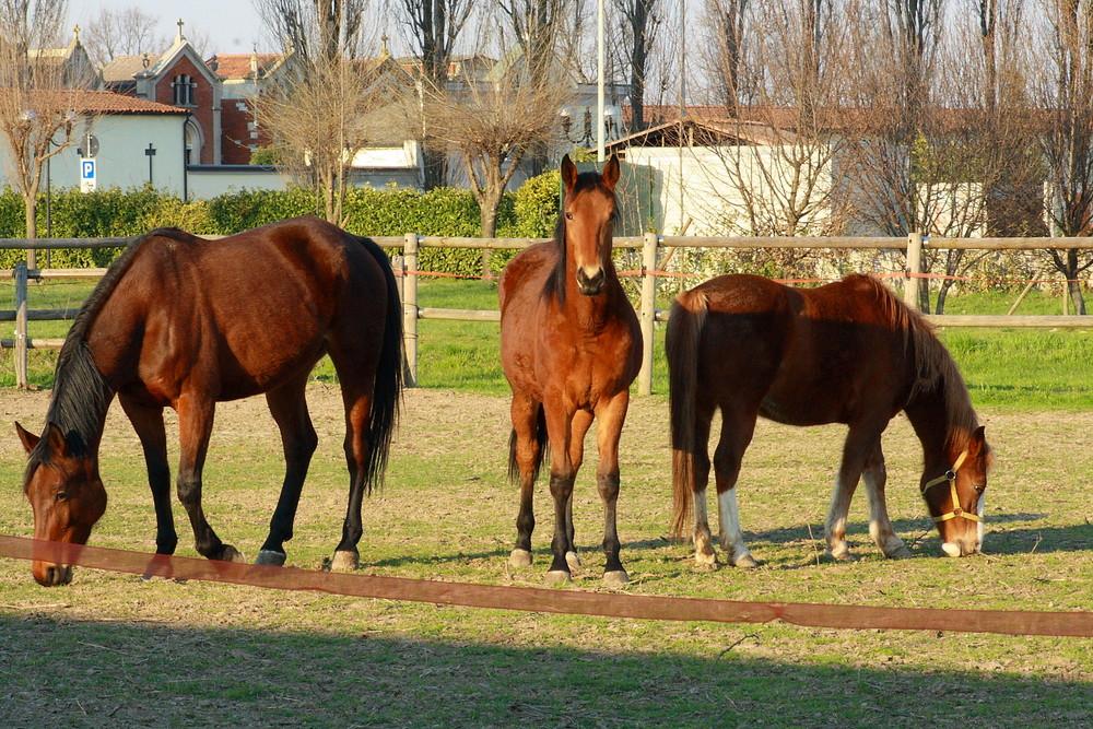 Horses Family