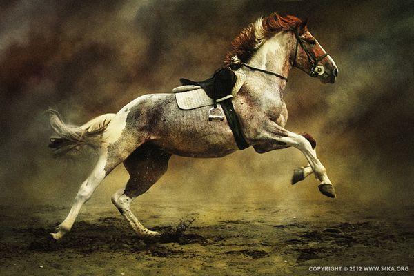 Horses XI