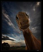 Horsesaurus rex...