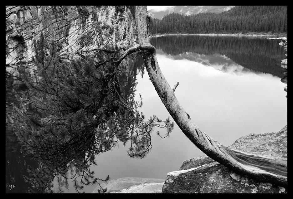 Horseshoe Lake II