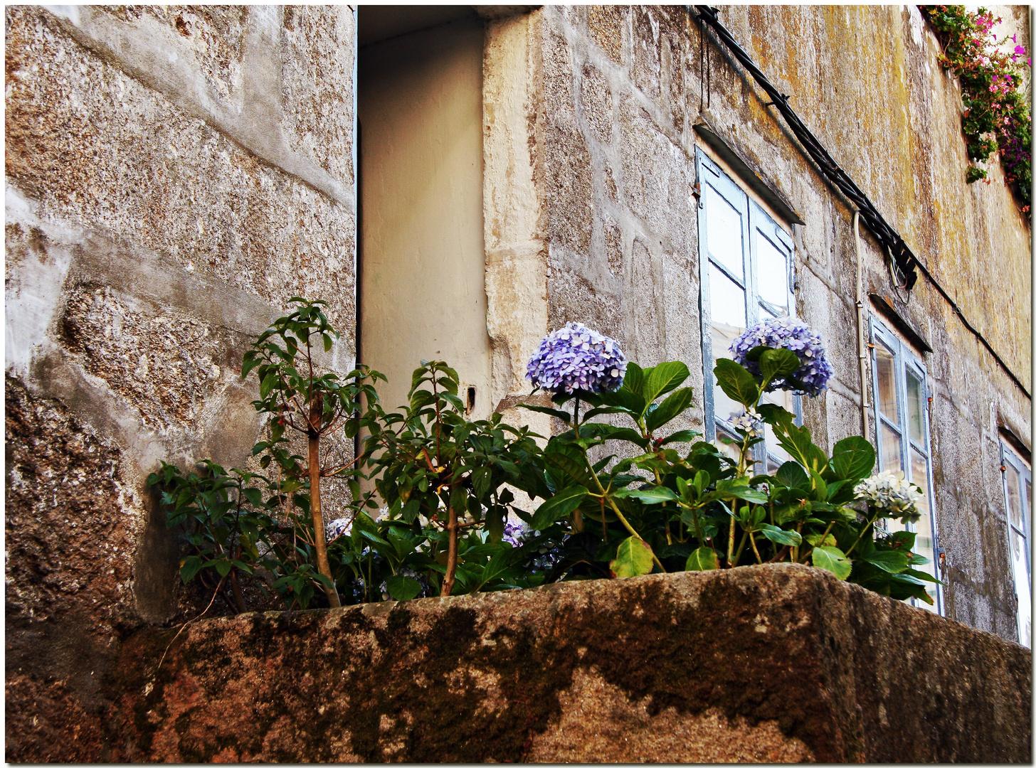 Hortensia e granito