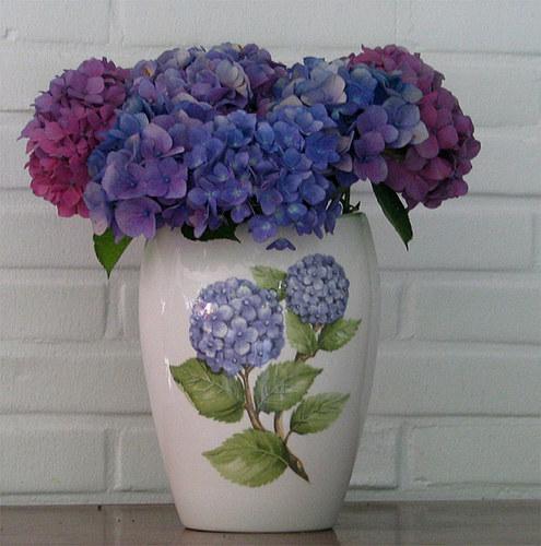 Hortensien in Vase
