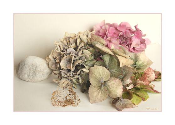 Hortensienblüten