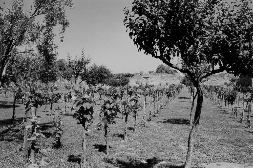 hortus vini