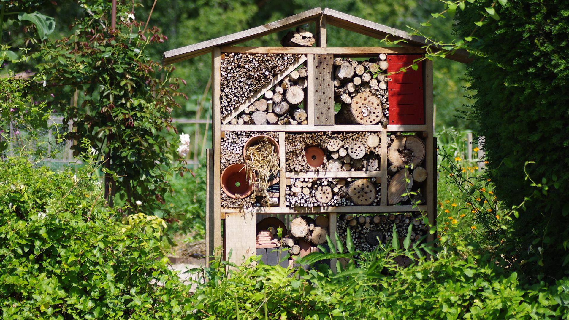 Hotel gratuit pour insectes