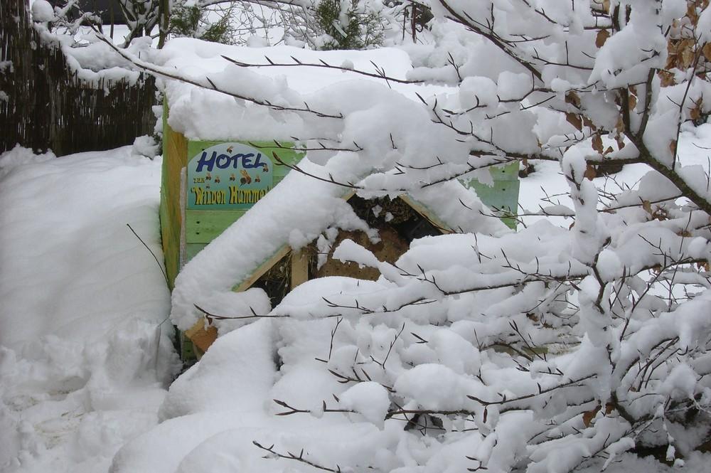 hotel zur wilden hummel, besetzt mit schnee