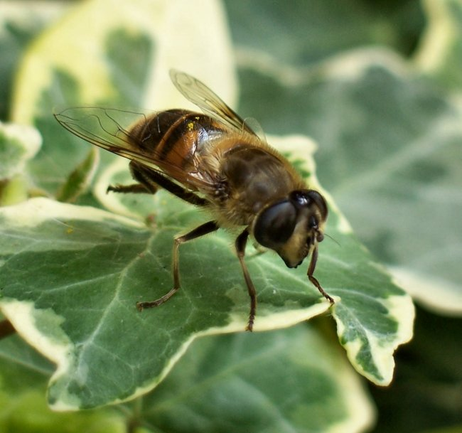 Hoverfly Cleaning