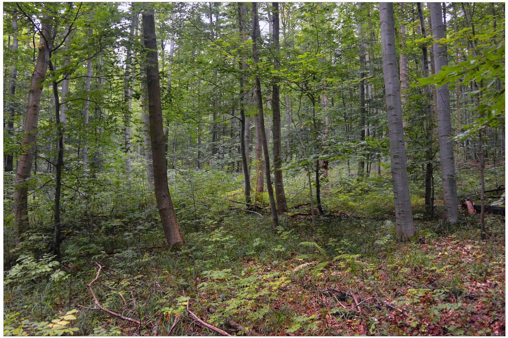 Hoy en el bosque II (Heute im Wald II)
