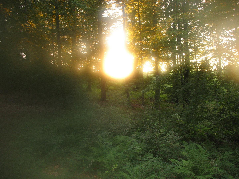 HSK Wald 2013