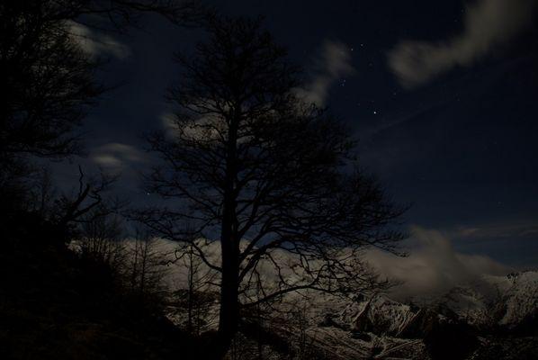 Hêtre montagnard sous la lune