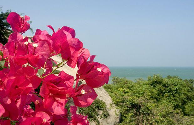 Hua Hin Flower 1
