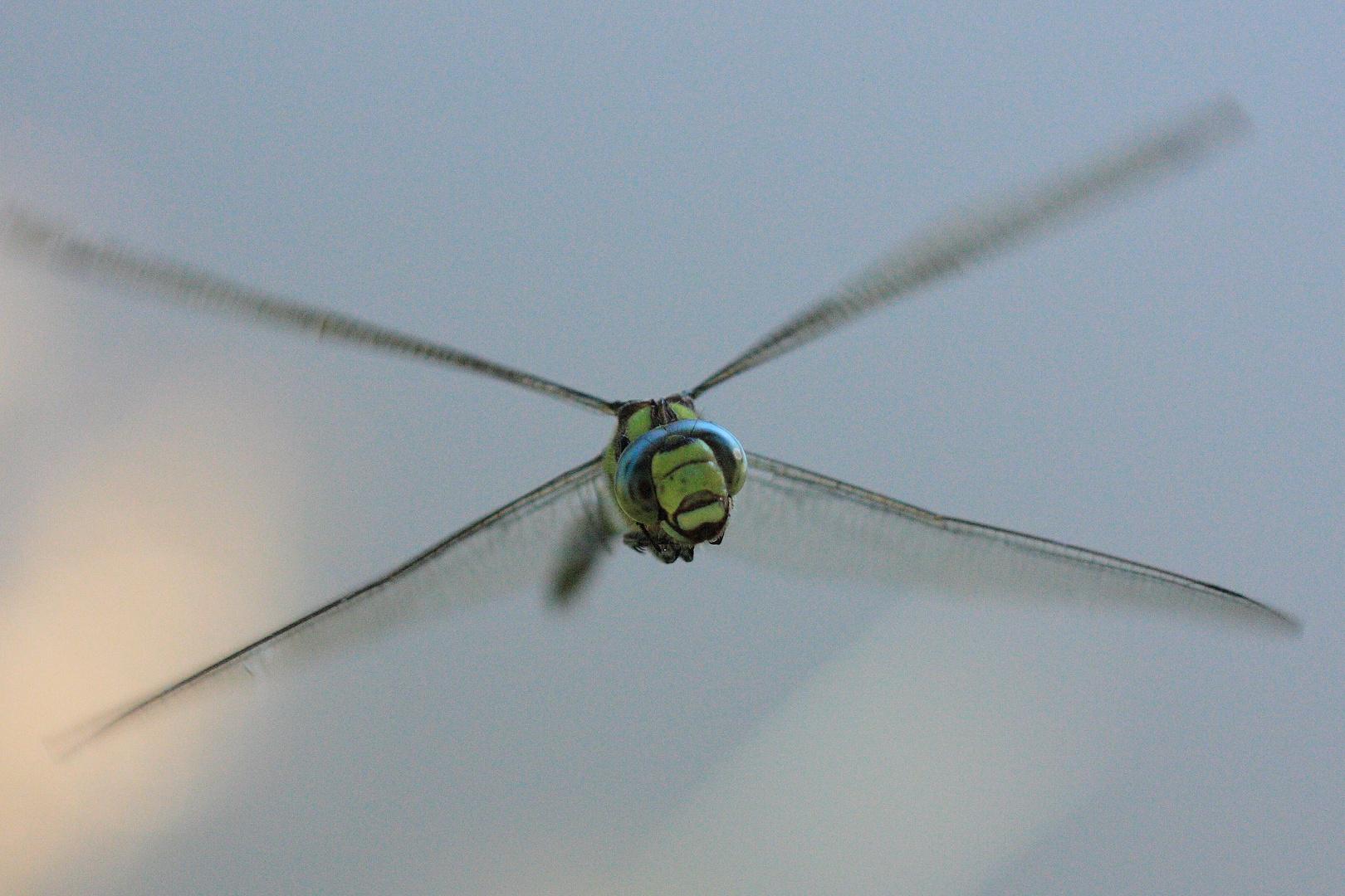 Hubschrauber, Alien oder doch eine Libelle?