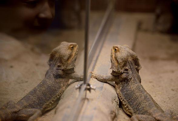 Huch, da schaut und einer zu wie wir und spiegeln.