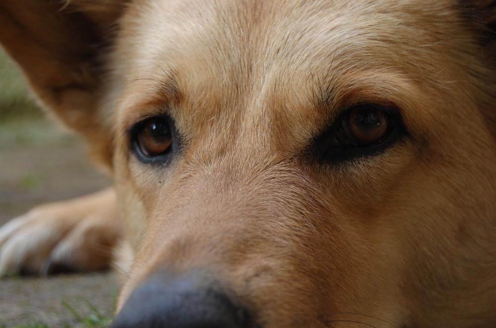 Hübscher Hund