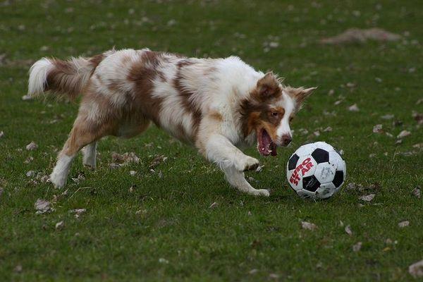 *hübscher Hund*
