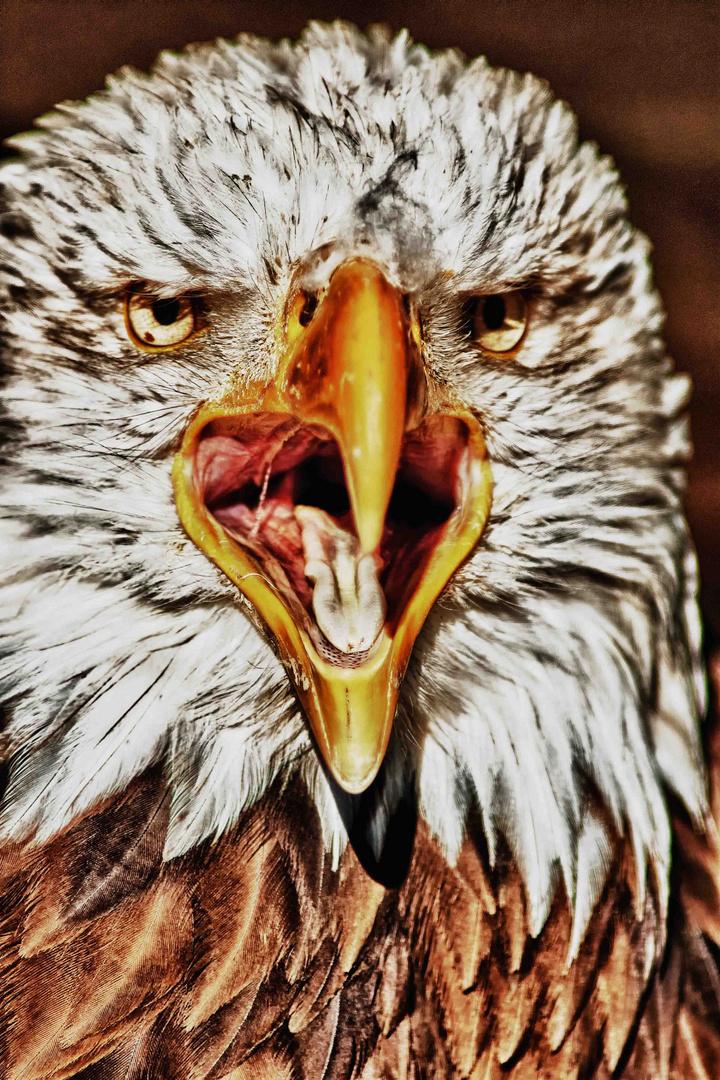 hübscher Raubvogel
