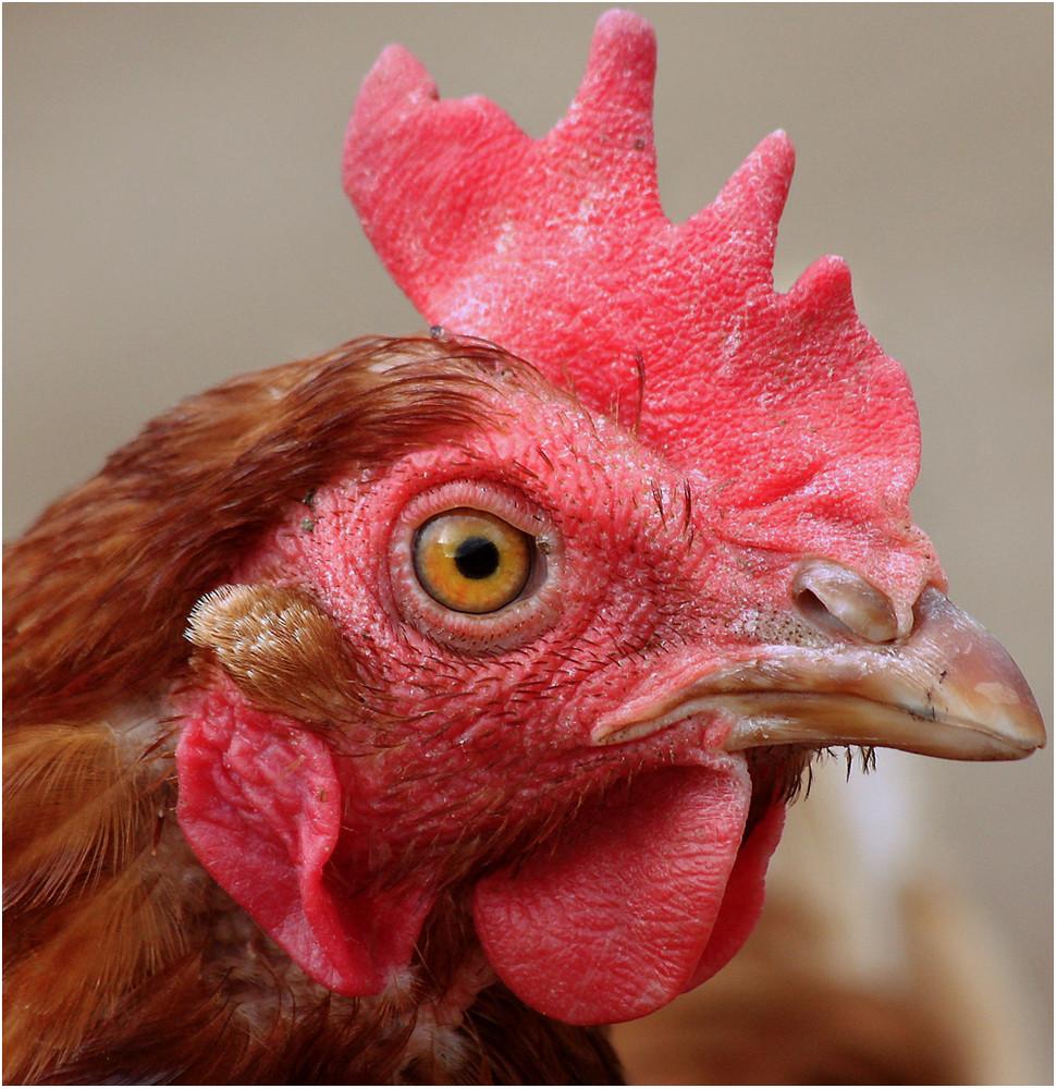 Hühnerauge...