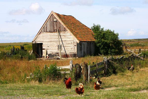 Hühnerstall auf Texel