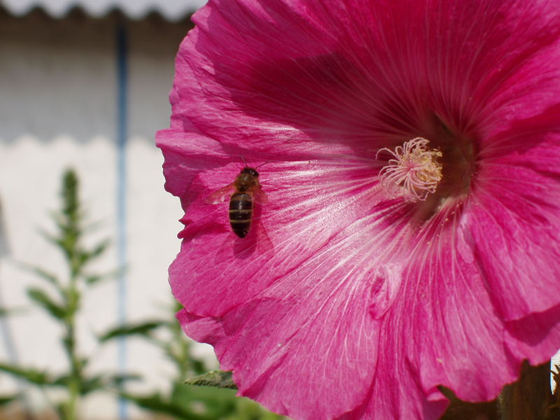 Huerta en primavera 2