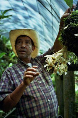 Hüter der Orchideen