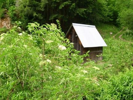Hütte am Waldrand