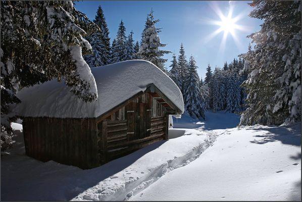 ~ Hütte im Wald II ~