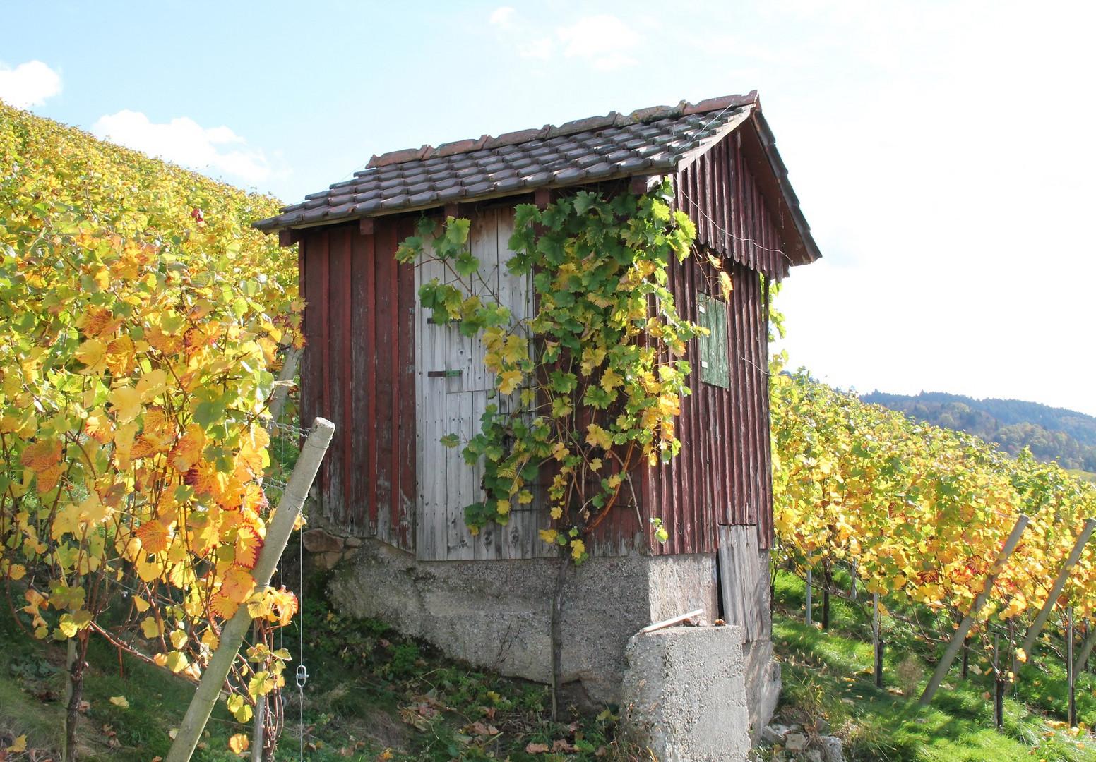 Hütte im Weinberg