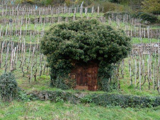 Hütte mit Pflanzen