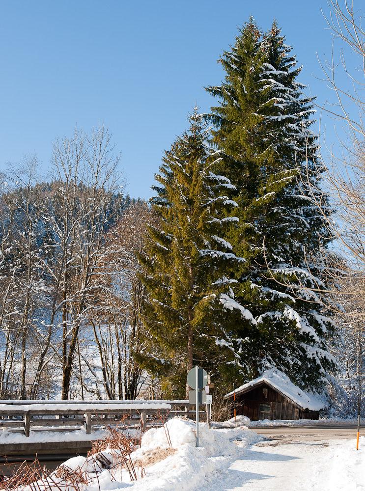 Hütte unterm Baum