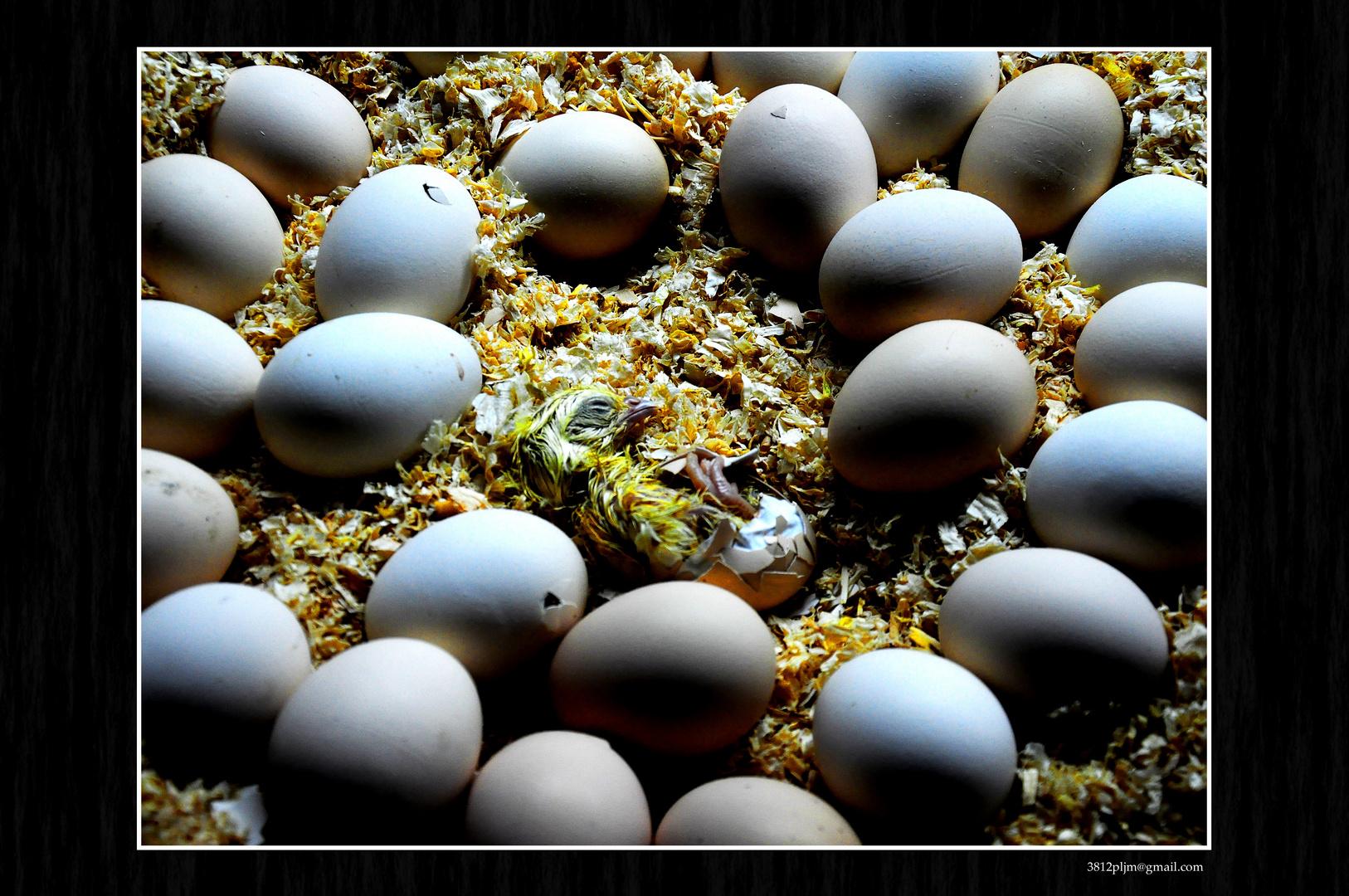 ¿Huevo o Gallina?