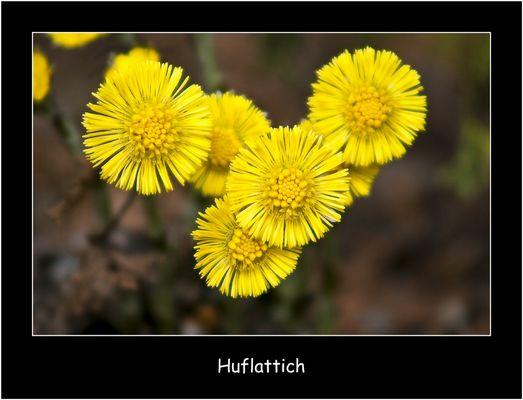 Huflattich....