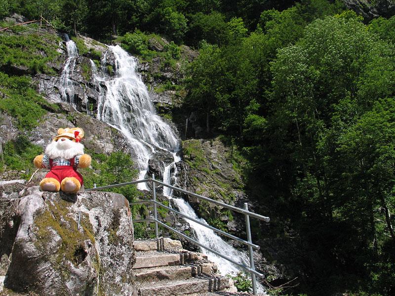 Hugo im Schwarzwald