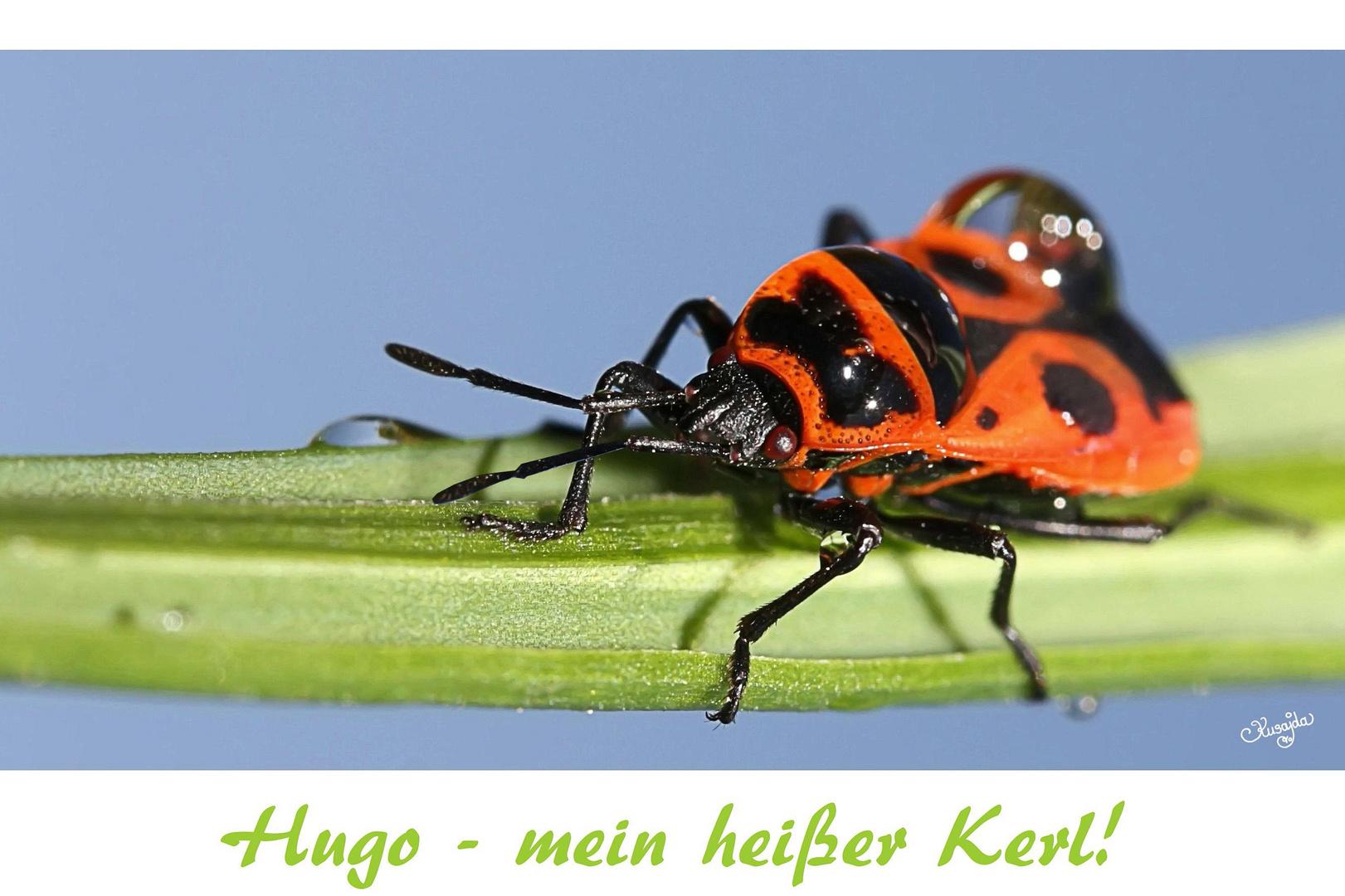 Hugo - mein heißer Kerl!