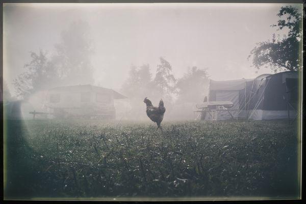 Huhn allein, alles fein...