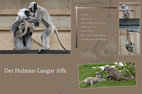 Hulman-Langur Affen