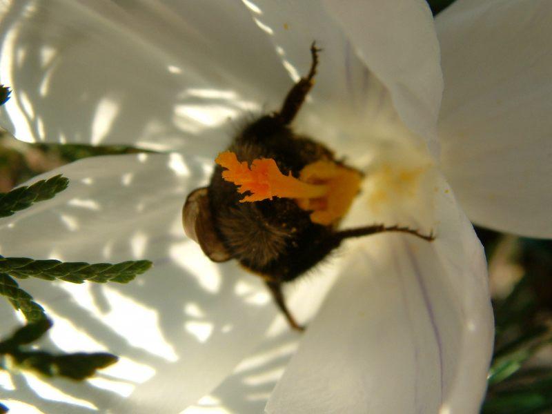 Hummels Frühlingserwachen