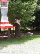 Hummingbird (Colibry)