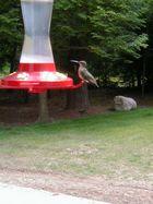 Hummingbird (Colibry)5