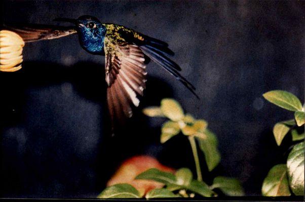 HUMMINGBIRDY