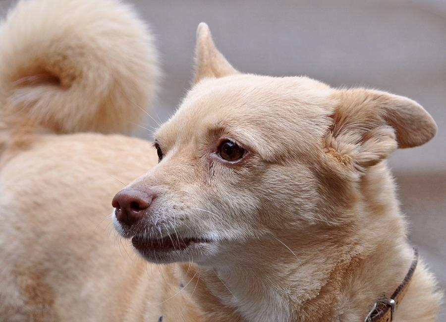 Hund (2)