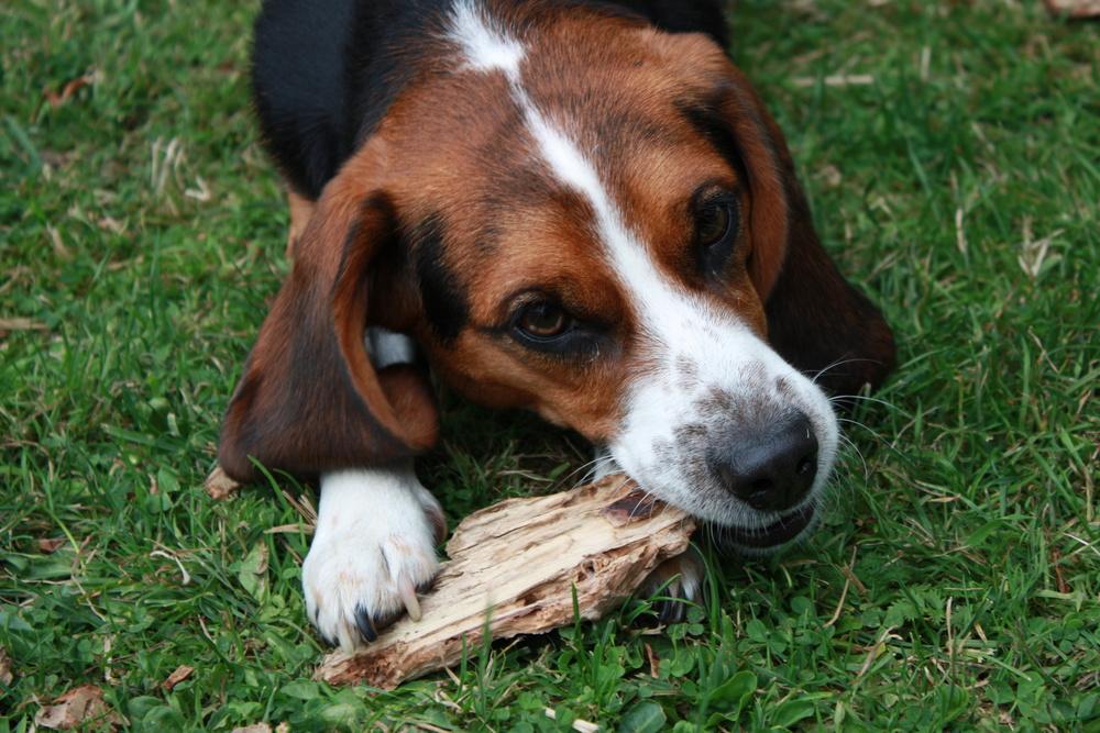 Hund :)
