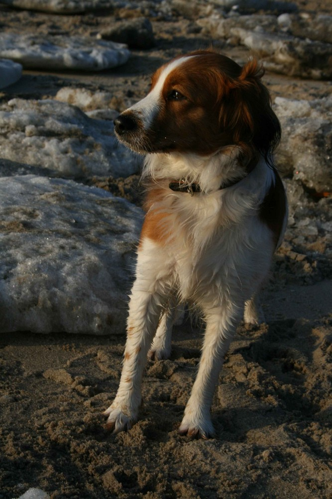 Hund am Eisstrand