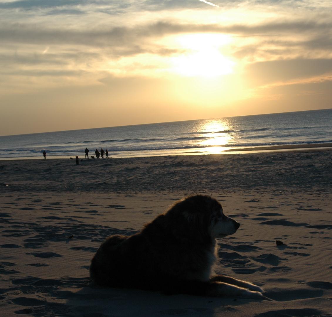Hund am Strand !