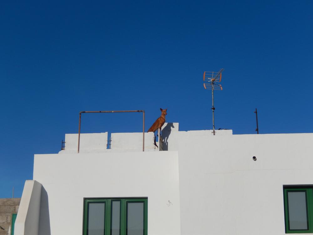 Hund auf dem Dach