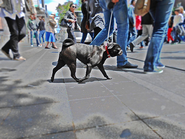Hund auf der Straße