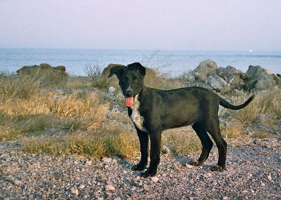Hund auf Kreta